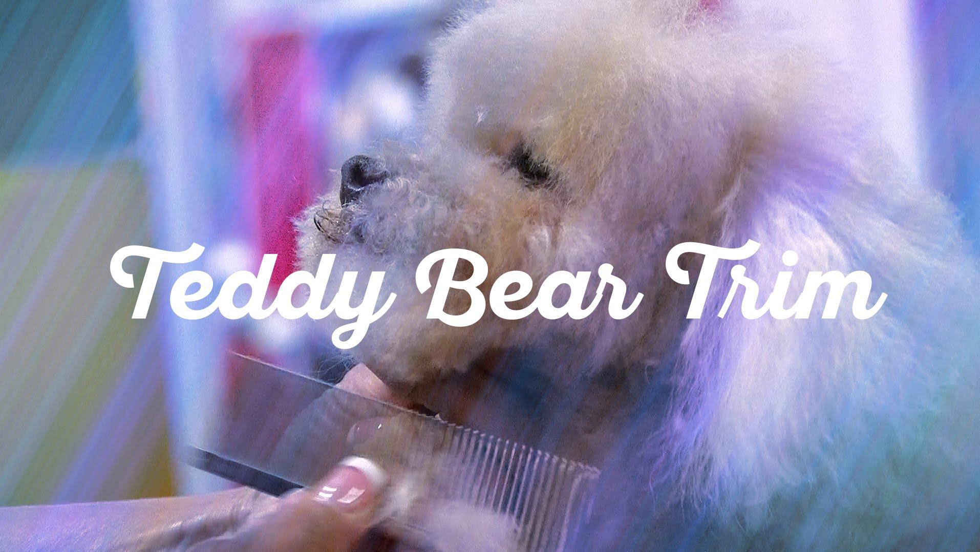 Dog Grooming Teddy Bear Face